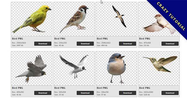 【小鳥PNG】精選115款小鳥PNG圖片素材免費下載,完全免去背的小鳥圖檔