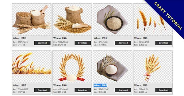 【小麥PNG】精選108款小麥PNG圖檔素材免費下載,免費的小麥去背圖片