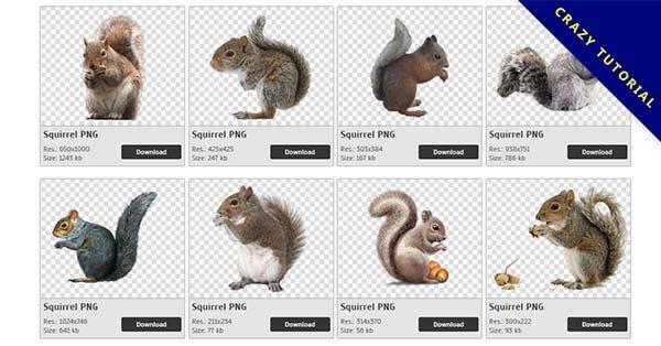 【松鼠PNG】精選40款松鼠PNG點陣圖素材免費下載,完全免去背的松鼠圖片
