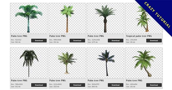 【棕櫚樹PNG】精選25款棕櫚樹PNG圖片素材包下載,免費的棕櫚樹去背圖案