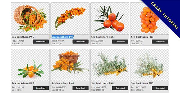 【沙棘PNG】精選40款沙棘PNG圖案下載,免費的沙棘去背圖片