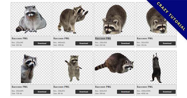 【浣熊PNG】精選19款浣熊PNG圖檔下載,完全免去背的浣熊圖檔