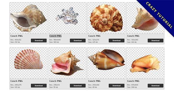 【海螺PNG】精選32款海螺PNG點陣圖免費下載,免費的海螺去背點陣圖