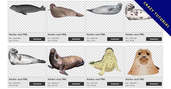 【海豹PNG】精選27款海豹PNG點陣圖素材免費下載,完全免去背的海豹圖案