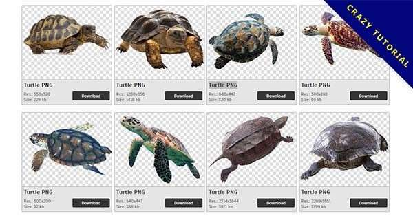 【烏龜PNG】精選69款烏龜PNG圖片素材下載,完全免去背的烏龜點陣圖