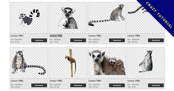 【狐猴PNG】精選35款狐猴PNG圖檔素材免費下載,完全免去背的狐猴圖案