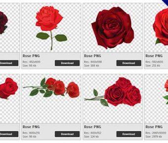 【玫瑰花PNG】精選359款玫瑰花PNG圖檔素材下載,免費的玫瑰花去背圖檔