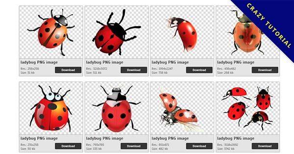 【瓢蟲PNG】精選12款瓢蟲PNG圖片素材包下載,免費的瓢蟲去背圖片