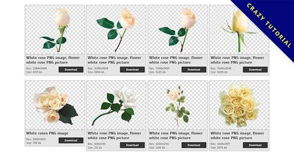 【白玫瑰PNG】精選27款白玫瑰PNG點陣圖素材包下載,免費的白玫瑰去背圖片