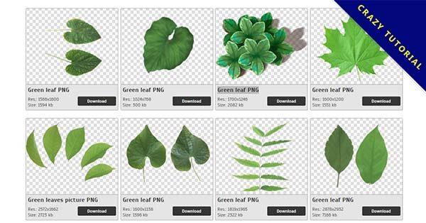 【綠葉子PNG】精選66款綠葉子PNG圖案下載,免費的綠葉子去背點陣圖
