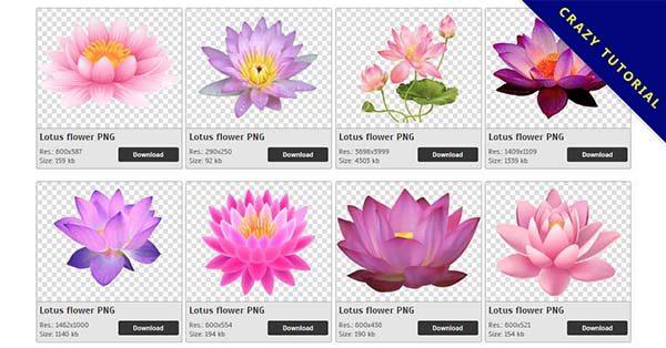【蓮花PNG】精選75款蓮花PNG圖檔素材下載,免費的蓮花去背圖案