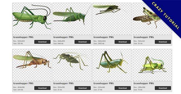 【蚱蜢PNG】精選46款蚱蜢PNG圖檔素材免費下載,免費的蚱蜢去背點陣圖