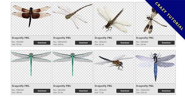 【蜻蜓PNG】精選32款蜻蜓PNG圖檔免費下載,免費的蜻蜓去背圖檔