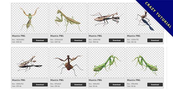 【螳螂PNG】精選71款螳螂PNG圖片免費下載,免費的螳螂去背圖片