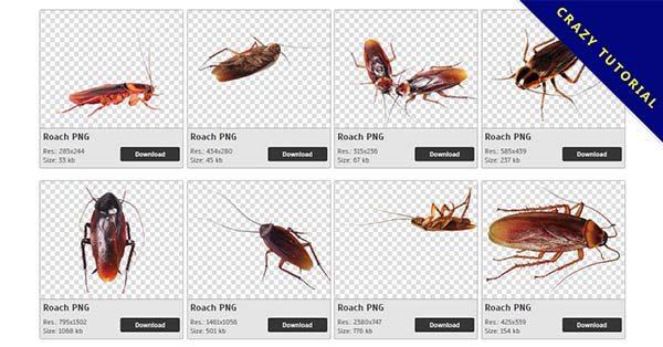 【蟑螂PNG】精選40款蟑螂PNG圖案下載,免費的蟑螂去背點陣圖