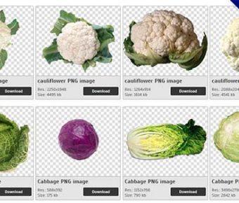 【高麗菜PNG】精選47款高麗菜PNG圖片素材下載,免費的高麗菜去背圖案