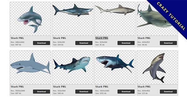 【鯊魚PNG】精選28款鯊魚PNG圖片素材下載,完全免去背的鯊魚圖案