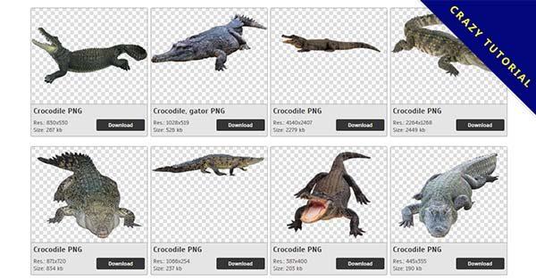 【鱷魚PNG】精選27款鱷魚PNG圖案下載,完全免去背的鱷魚圖片