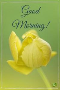 Good morning picture with yellow flower and quote.