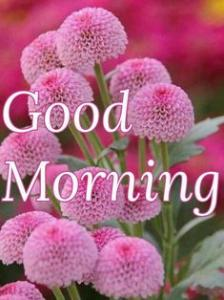 Download Best Good Morning Flowers Images – Beautiful Good Morning Images – Good Morning Flower Images Download For WhatsApp
