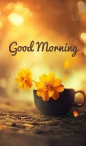 Good Morning :) #goodmorningquotes #freshstartquotes #newbeginingquotes #quotes #inspirationalquotes #dailyquotes #quoteoftheday #therandomvibez #lifequotes #motivationalquotes