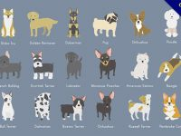 【小狗圖案】狗狗推薦:26個可愛的小狗圖案下載
