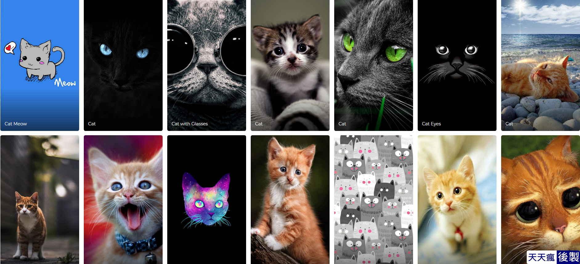 貓咪手機桌布