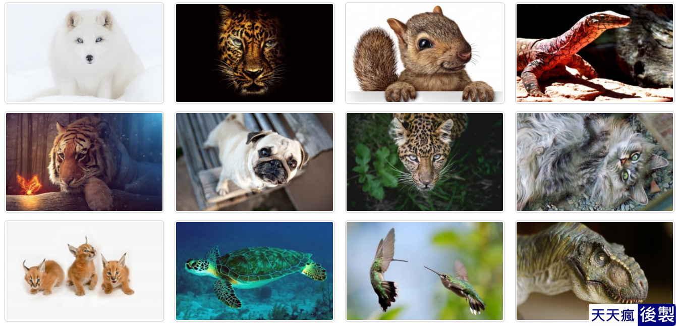 動物桌布圖下載