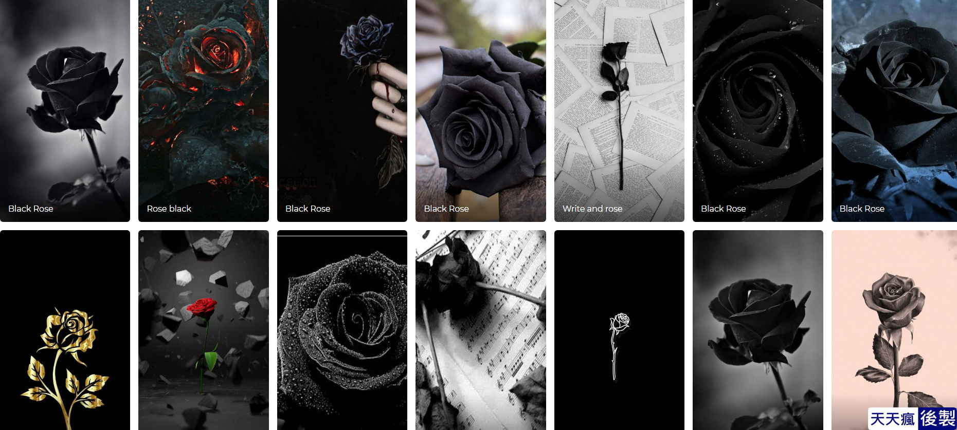 玫瑰桌布下載