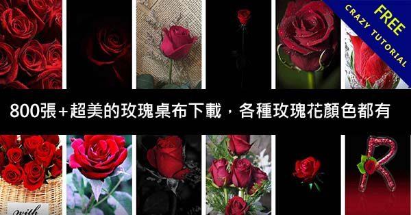 800張+超美的玫瑰桌布下載,各種玫瑰花顏色都有