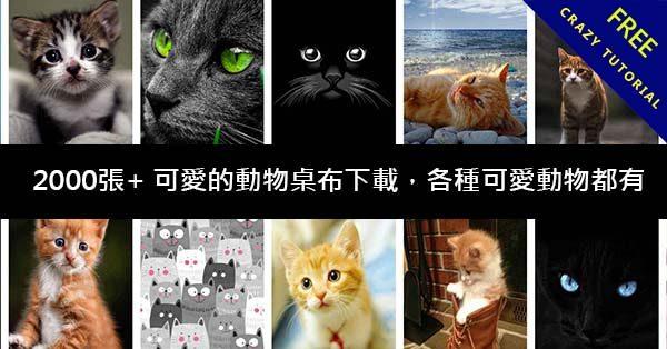2000張+ 可愛的動物桌布下載,各種可愛動物都有