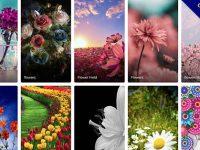 『花桌布』600張手機花朵桌布下載,手機支援iphone和android
