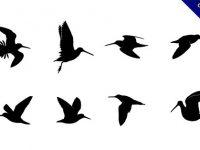 【鳥剪影】剪影推薦:47個有黑色的鳥剪影圖下載
