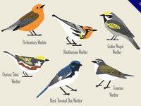 【鳥插圖】插圖推薦:30張可愛的鳥插圖素材下載