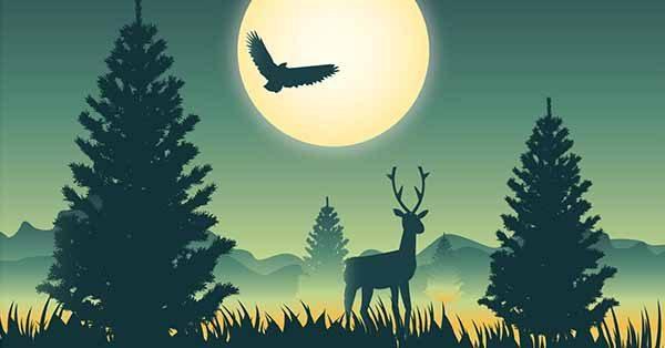【森林卡通】圖案推薦:42張可愛的森林卡通圖下載